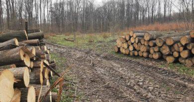 Radni i mieszkańcy postulują w sprawie lasu